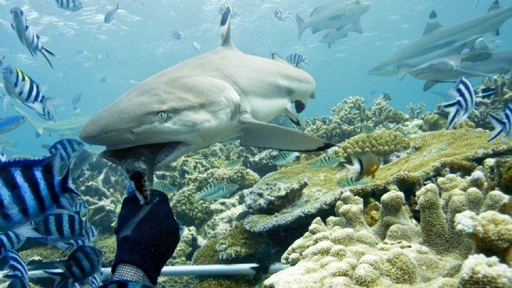 Live-Aboard Listings | Scuba Diving