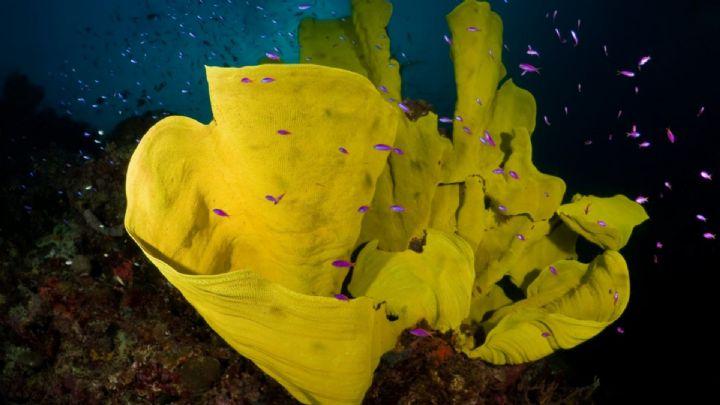 Truk Lagoon Dive Information
