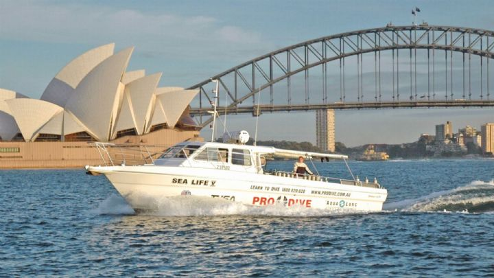 Pro Dive's Sea Life V in Sydney Harbor