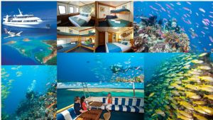 3 Day / 3 Night Cod Hole & Ribbon Reef- Spirit Of Freedom - Dive Adventure