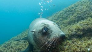 Narooma Seals trip