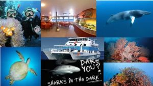 3 Day/2 Night Dive to Adventure - MV Ocean Quest