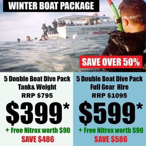 Winter Sealife V Boat Packages
