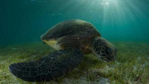 https://www.prodive.com.au/Lord+Howe+Island/Boat+Dives/10+Boat+Dive++5+Day+Package+-+Lord+Howe+Island/1566