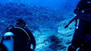 Beqa Lagoon - Fiji 8 - 15 August 2020