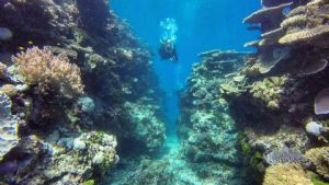 Dive The SS Yongala and the GBR 15th-19th July