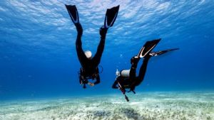 https://www.prodive.com.au/Sydney+-+Coogee/Shore+Dives/Guided+Shore+Dives+-+Sydney+-+Coogee/1046